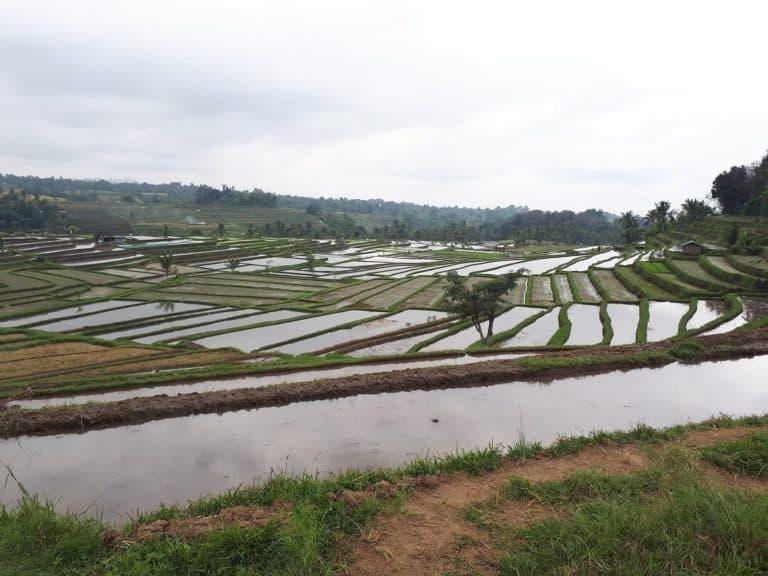 riziere bali indonesie