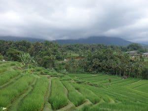 riziere lombok senaru indonesie
