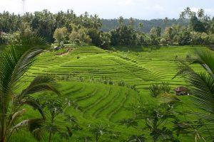rizières paysage ensoleillé bali