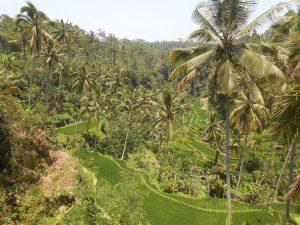 rizières balinaises découverte nature