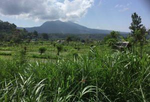 rizières balinaises mont batur