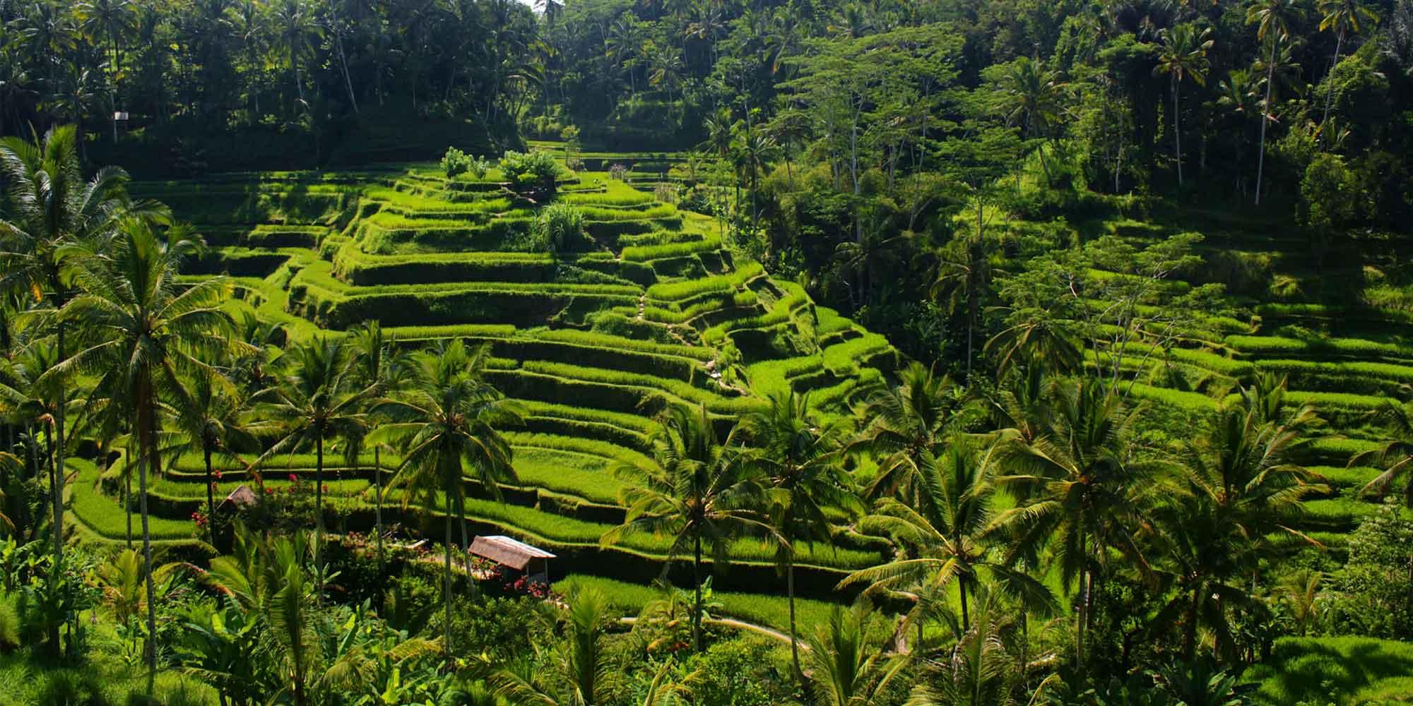 que faire à Bali que voir visiter Bali