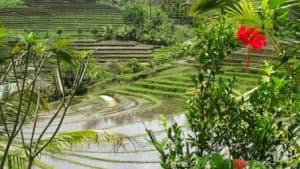 jatiluwih rizières bali paysage indonésie