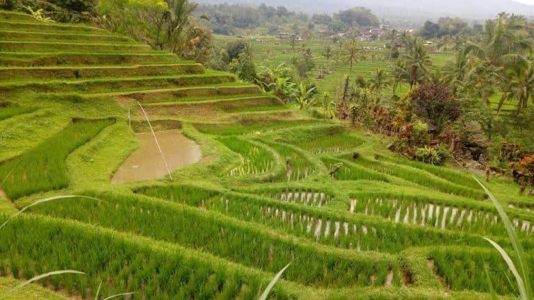 rizieres bali indonesie