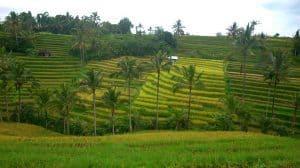 Jatiluwih rizières bali aventure