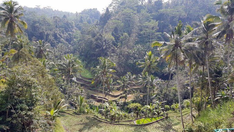 rizieres bali indonesie sejour