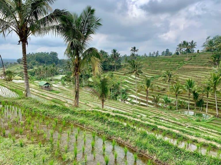 rizieres bali jatiluwih
