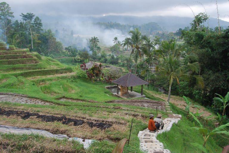 paysage de rizieres balinaises