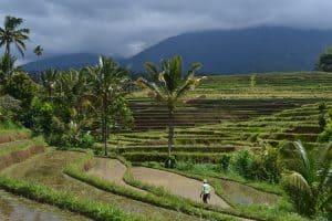 rizières paysage balinais indonésie