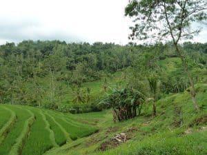 rizières bali paysage grandiose