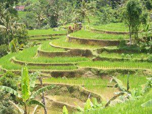 voyage bali découverte paysage rizières