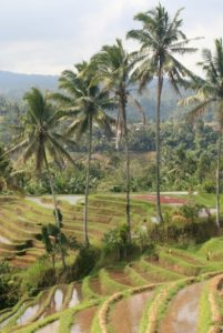 rizières bali nature