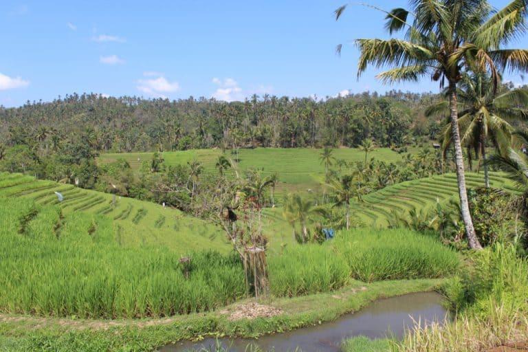 rizières bali circuit agence voyage indonésie