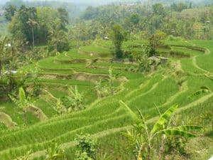 rizières balinaises découverte paysage authentique
