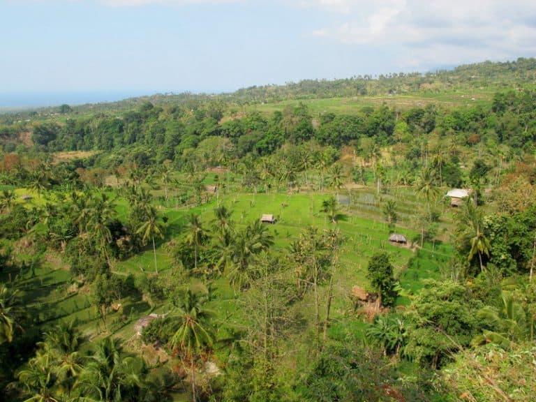 paysage rizières bali indonésie