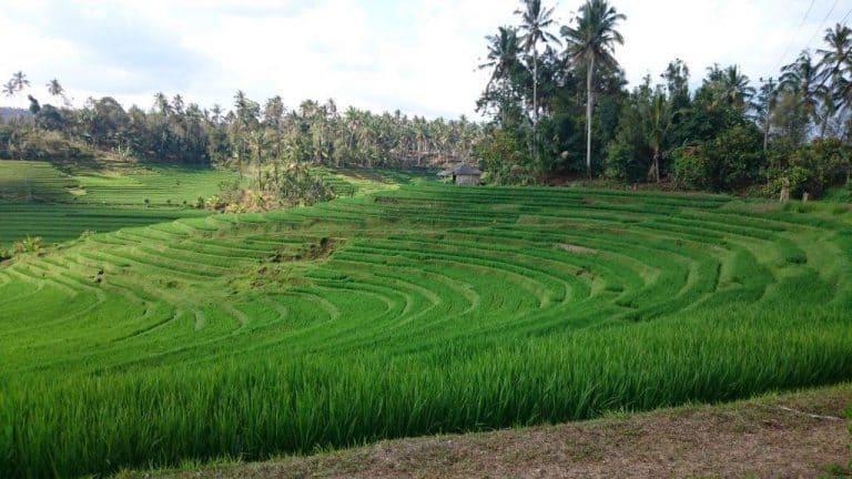 rizières jatiluwih bali partrimoine unesco