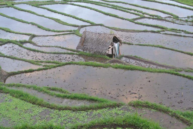 habitat balinais rizières indonésie