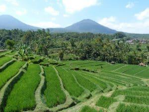 rizières en cascade bali