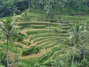 rizières en cascades paysage bali