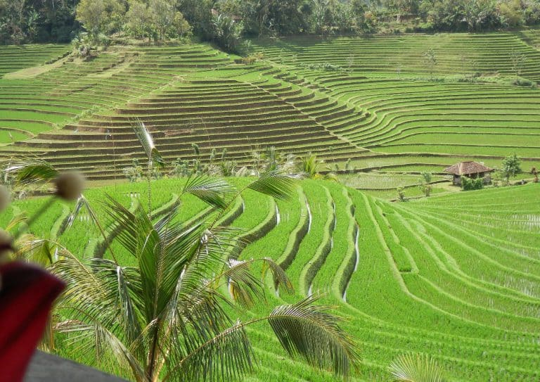 rizières en cascade paysage majestueux bali
