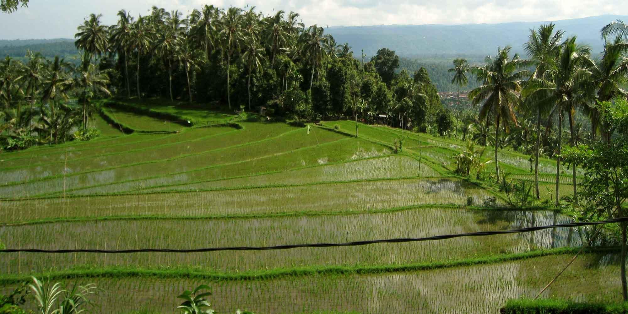 rizieres panorama indonésie