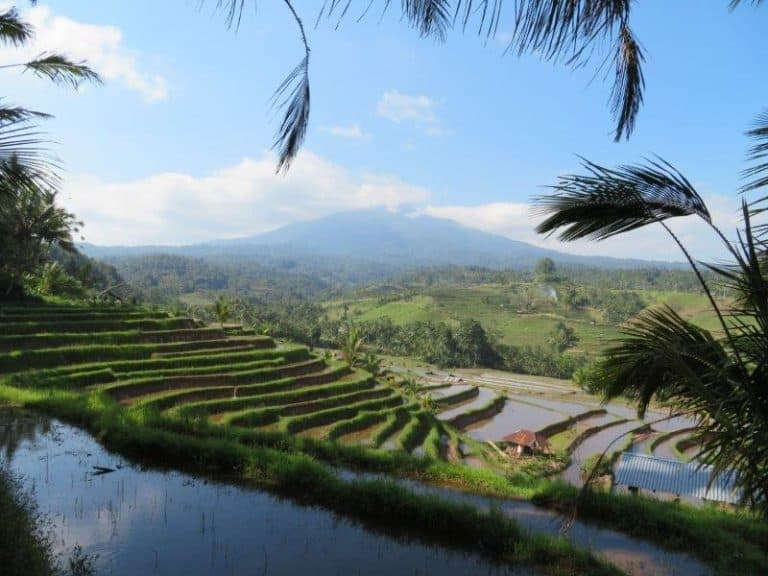 Rizières et volcan bali indonesie