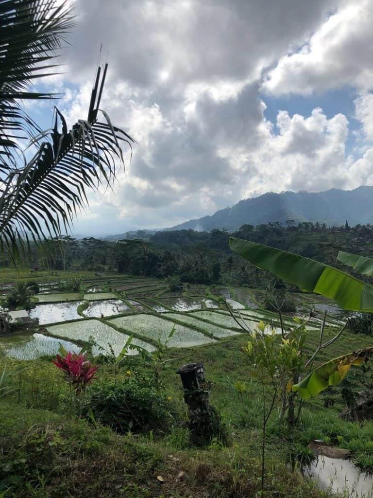 rizières indonesie