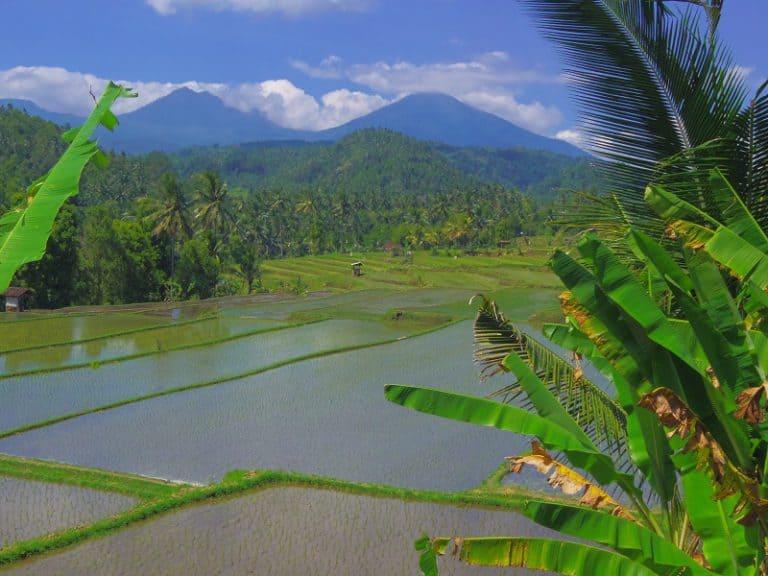 vue panoramique rizières bali