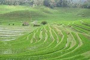 rizières en cascade ubud