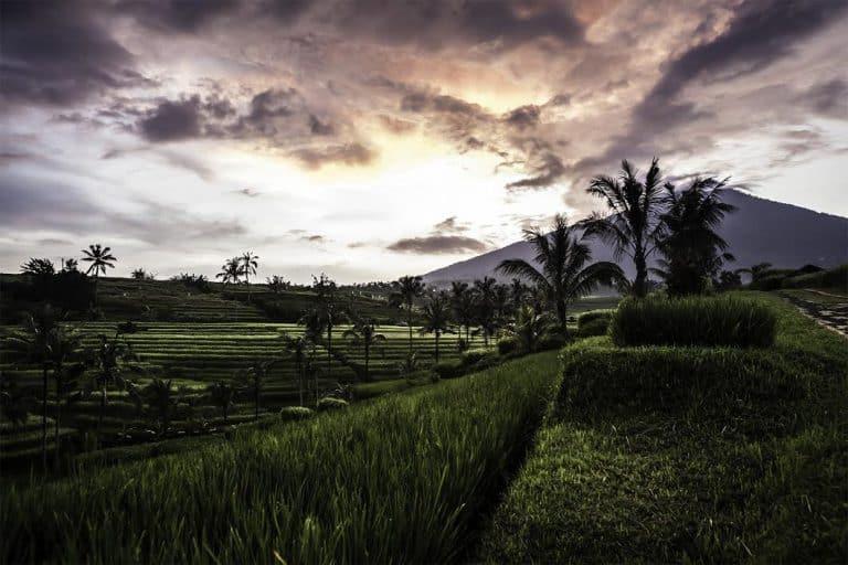 paysage rizières bali sunset indonésie