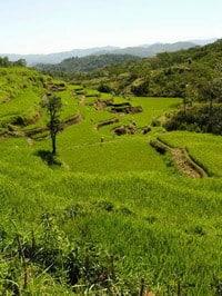 Ruteng Flores Indonésie rizières