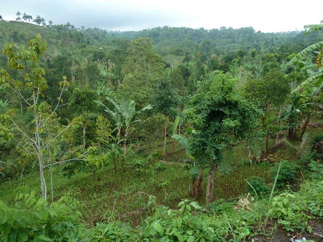 sembalung lombok indonesie trek