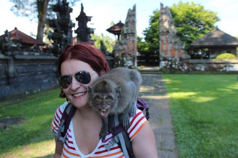 singe macaque bali