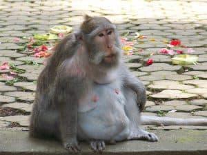 ubud fôret des singes attractions locales bali