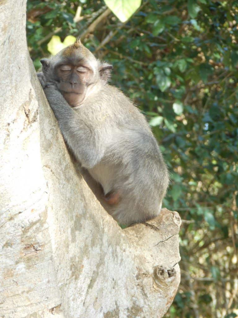 monkey forest activité bali