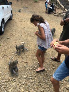 singes macaques bali indonesie avis 2019