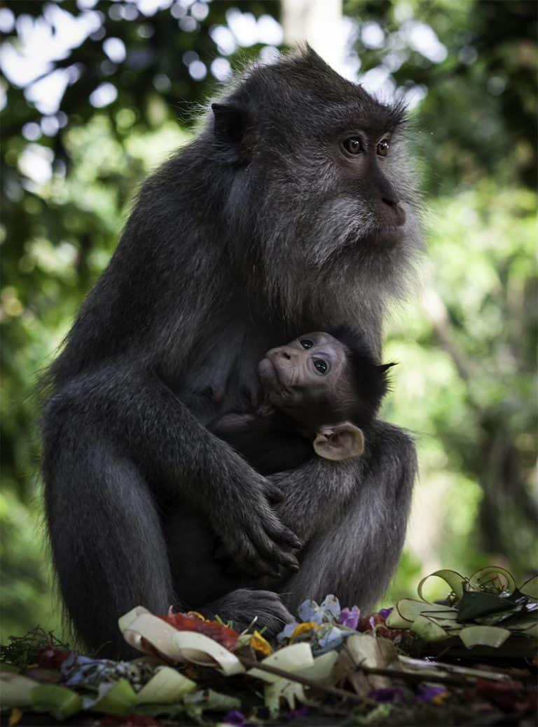 Ubud fôret des singes activité bali