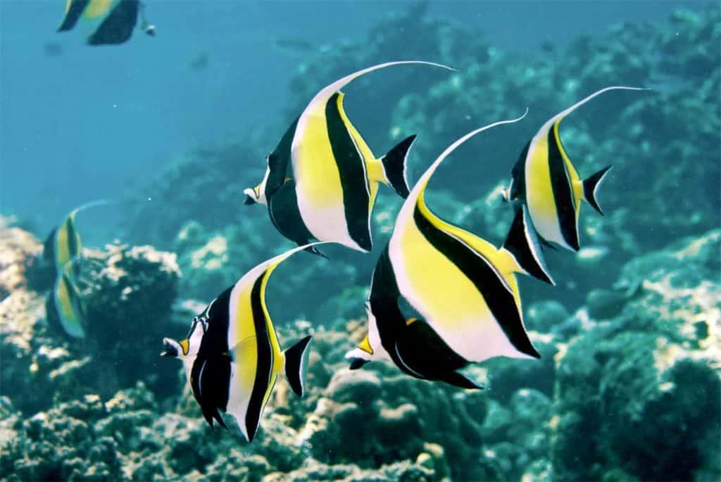 snorkeling Bali Indonesia poisson