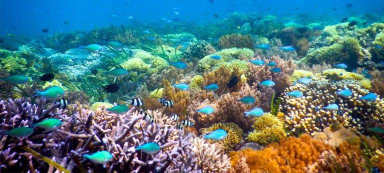 snorkeling iles Gili corail