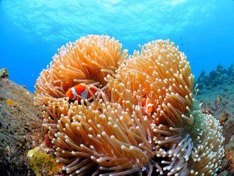 Snorkeling plongée Bali Indonesia clown