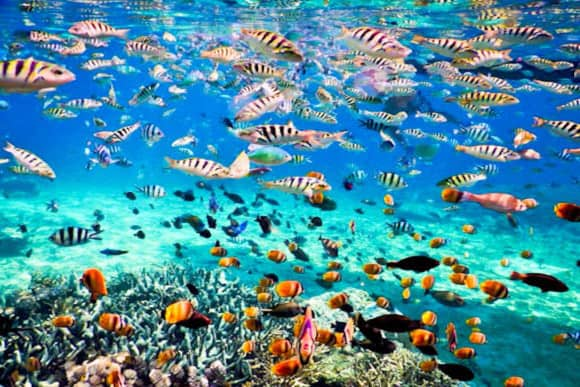 snorkeling plongée Bali Indonesia fish