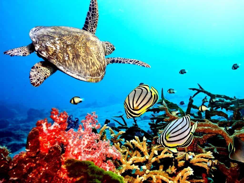 snorkeling plongée Komodo Flores