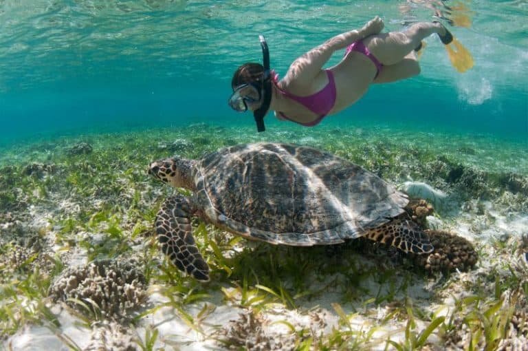 snorkeling tortue Bali Indonesia