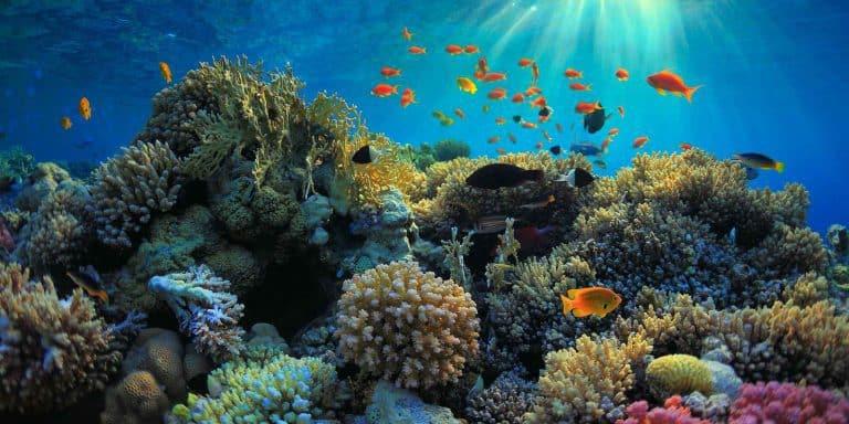 snorkling bali amed fonds marins
