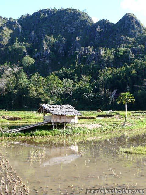 sulawesi suaya region toraja montagne paysage