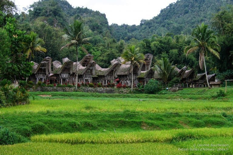 sulawesi toraja maison traditionnelle kete kesu