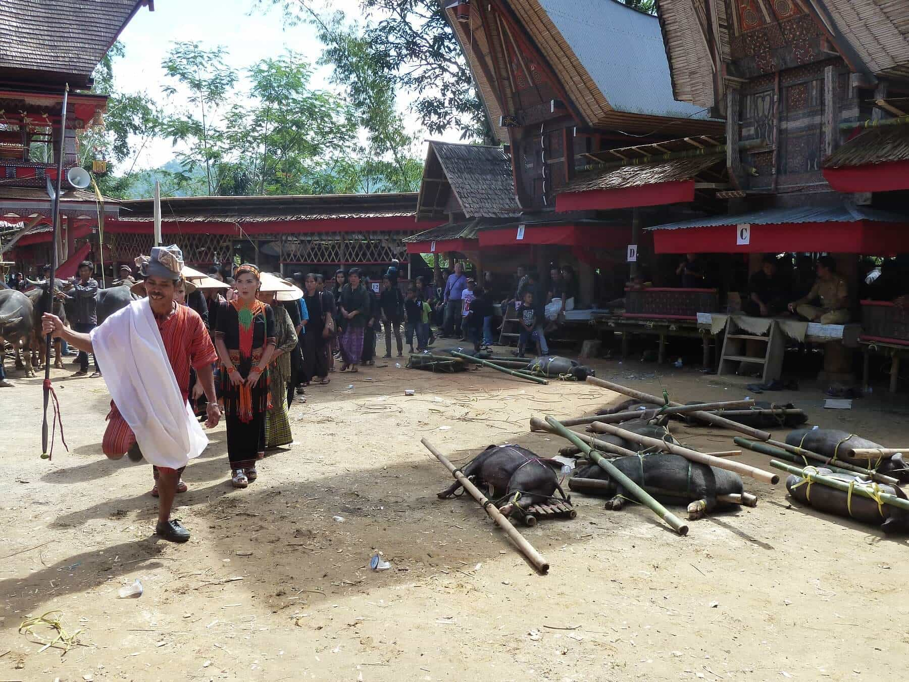 Sulawesi Toraja ceremonie danse