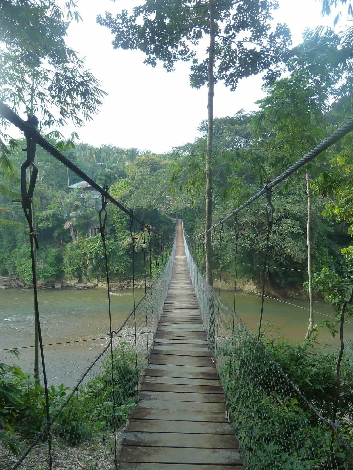 Sumatra Tangkahan pont de singe