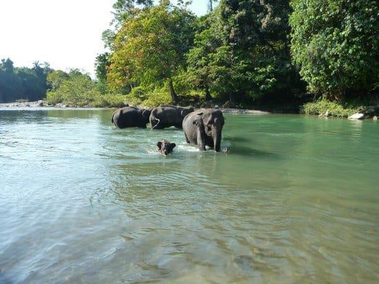 sumatra Tangkahan éléphant rivière