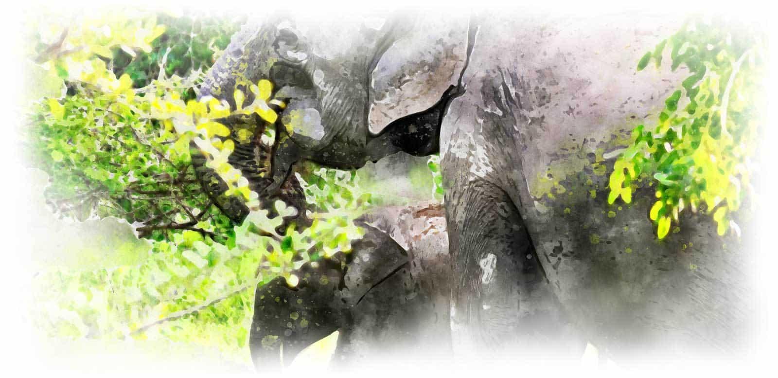 voyage Sumatra éléphant